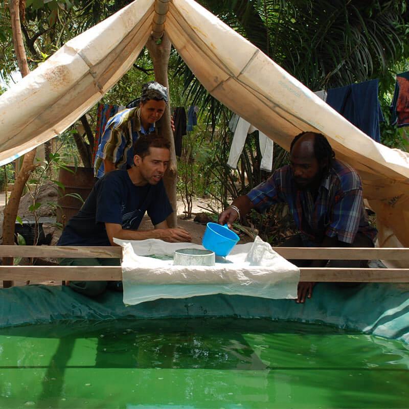 Spirulina gegen Mangelernährung in Afrika
