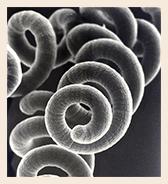 Spirulina Alge unterm Mikroskope - AKAL Food